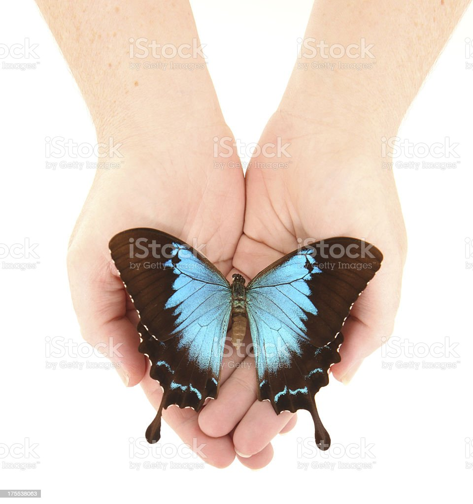 Butterfly in Hands stock photo