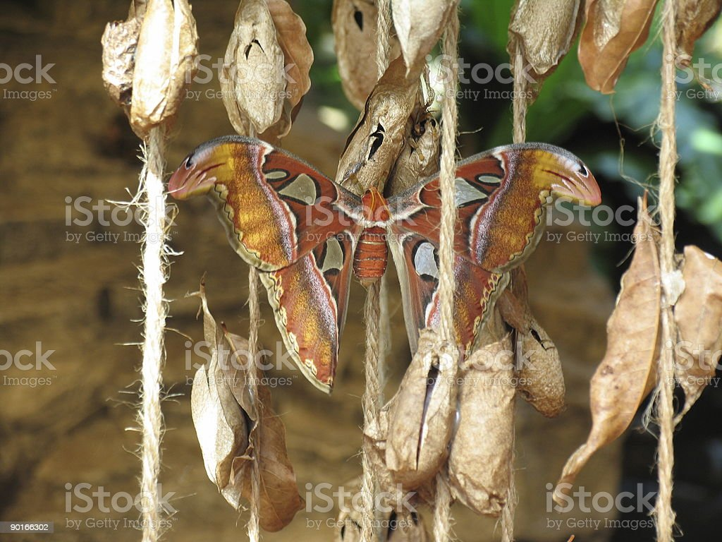 Butterfly in is nest stock photo