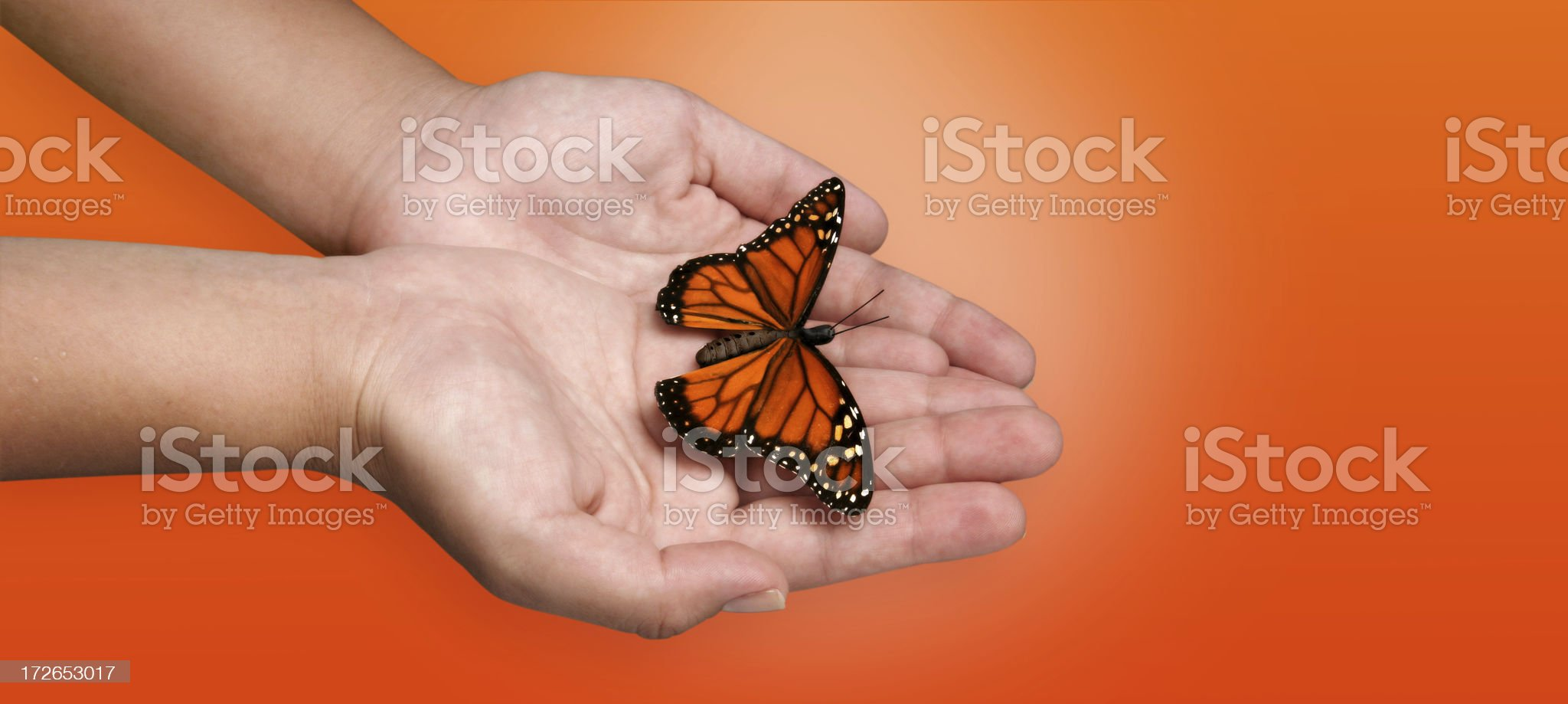 Butterfly in my hand royalty-free stock photo
