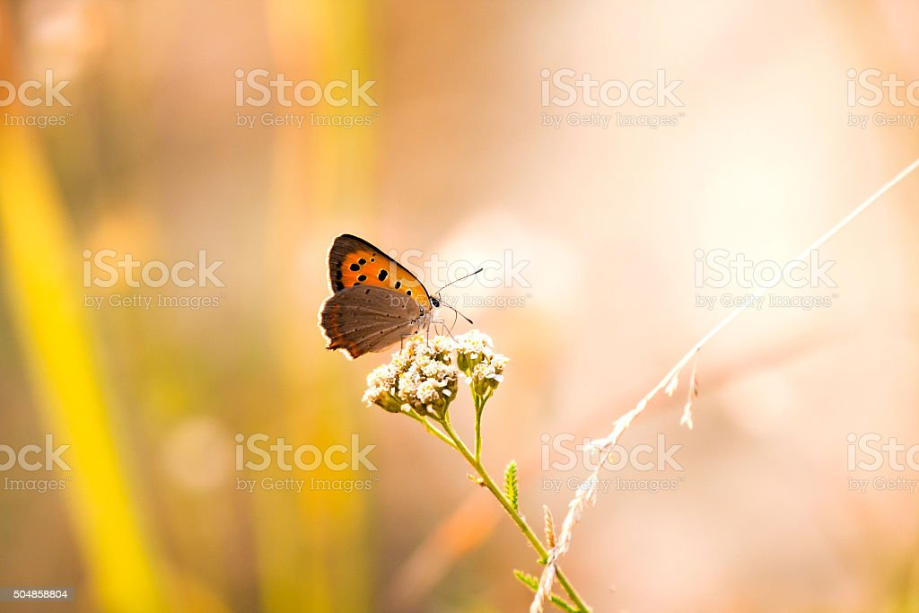 Butterfly in Natural background. stock photo