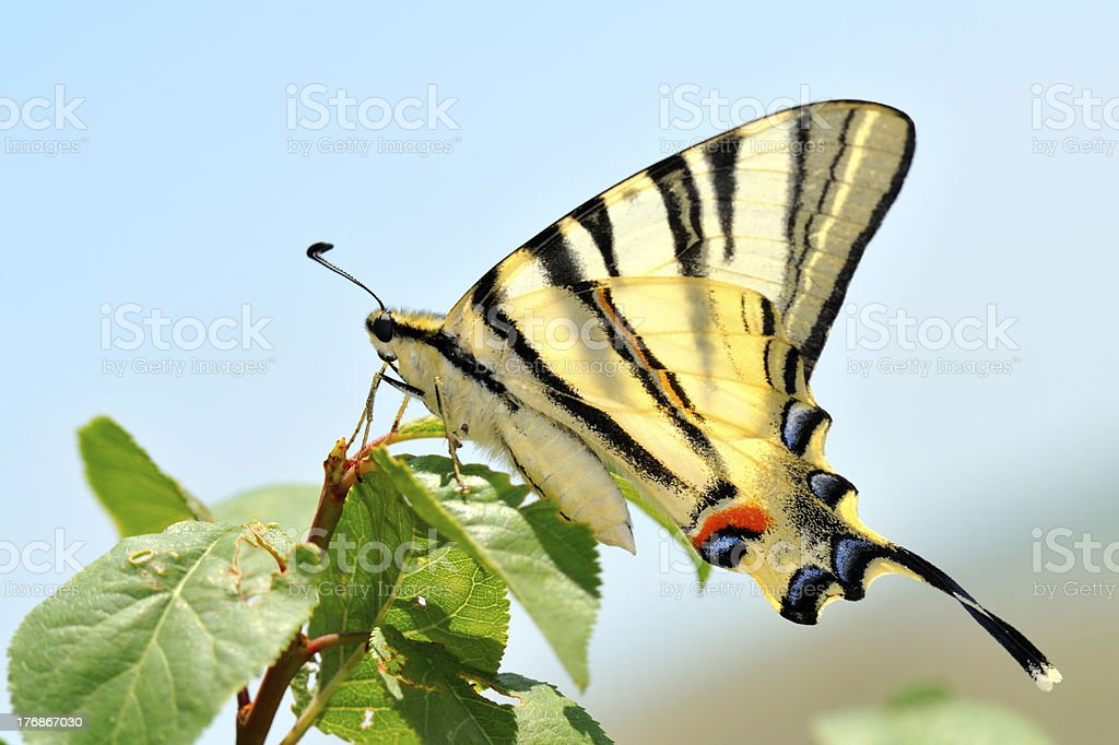 butterfly in natural habitat stock photo