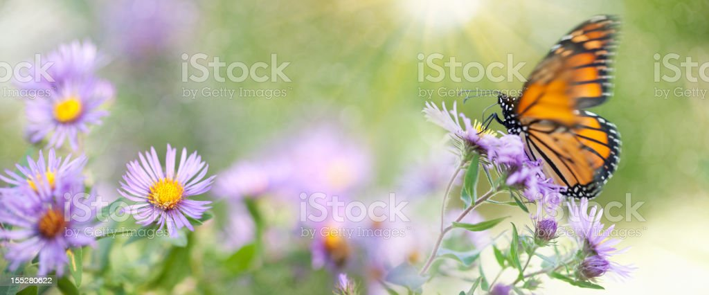 Butterfly in Nature stock photo
