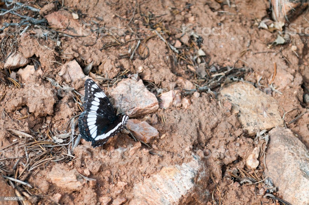 Butterfly in the Black Canyon of the Gunnison, National Park, Colorado stock photo