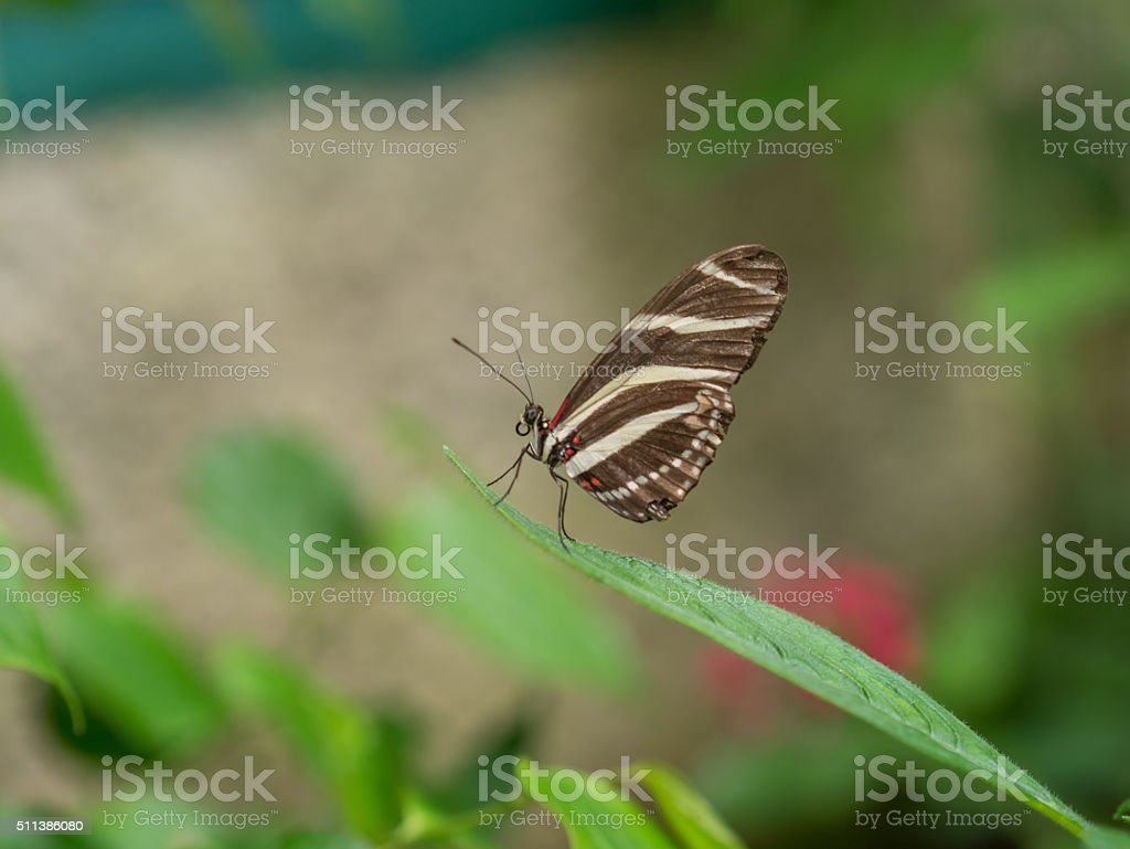Butterfly in the Garden royalty-free stock photo