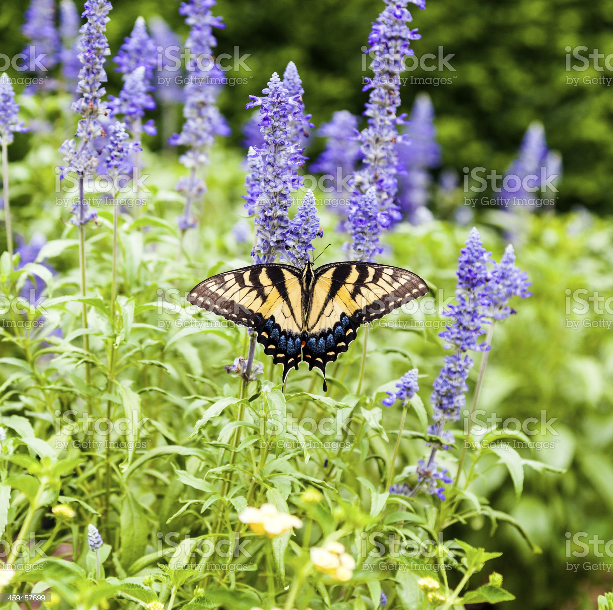 butterfly in the green nature royalty-free stock photo
