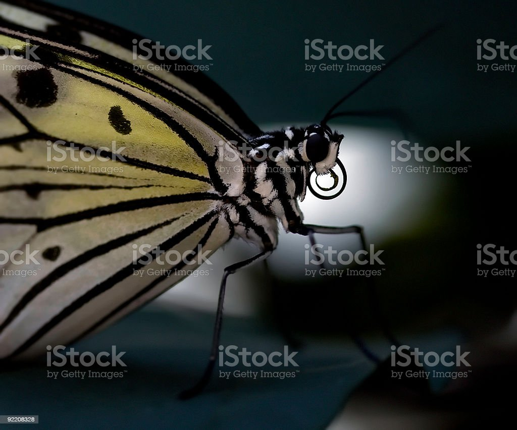 Butterfly in the shadows stock photo