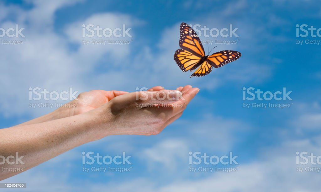 Butterfly in the Sky royalty-free stock photo