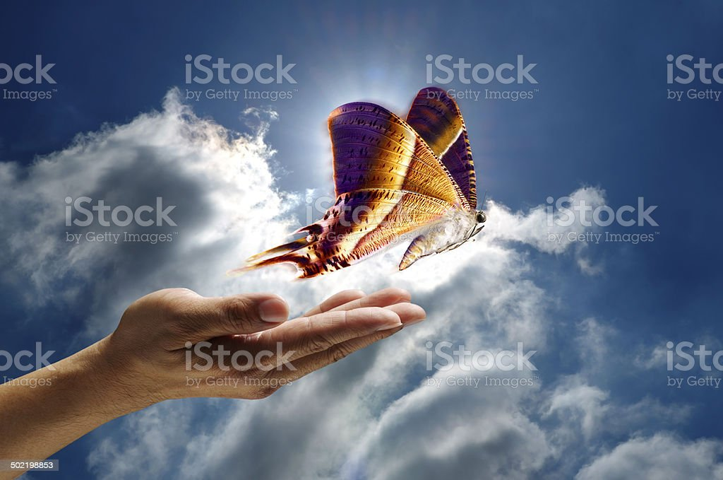 Butterfly in the Sky stock photo