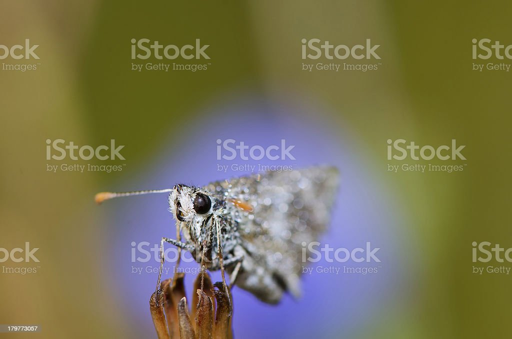 Butterfly is dried on the grass royalty-free stock photo