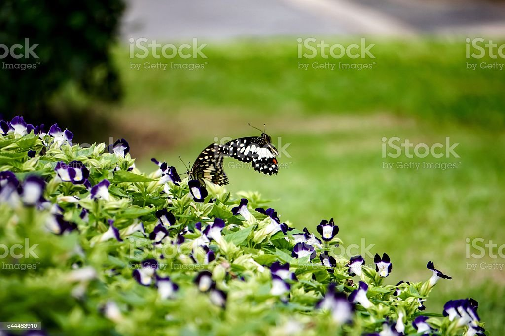 Butterfly isolated on flowers background royalty-free stock photo