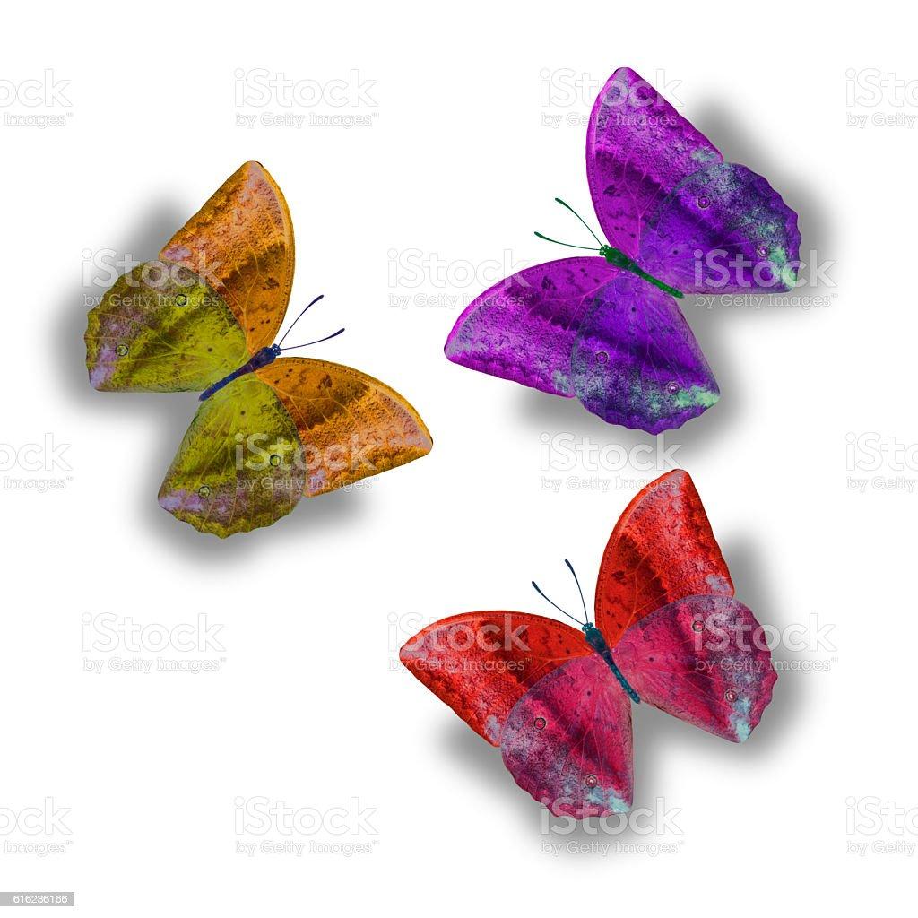 Papillon isolé sur fond blanc photo libre de droits