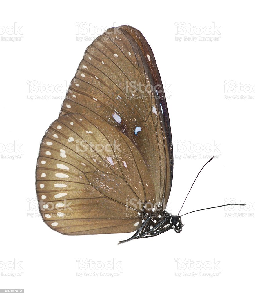 butterfly isolated royalty-free stock photo