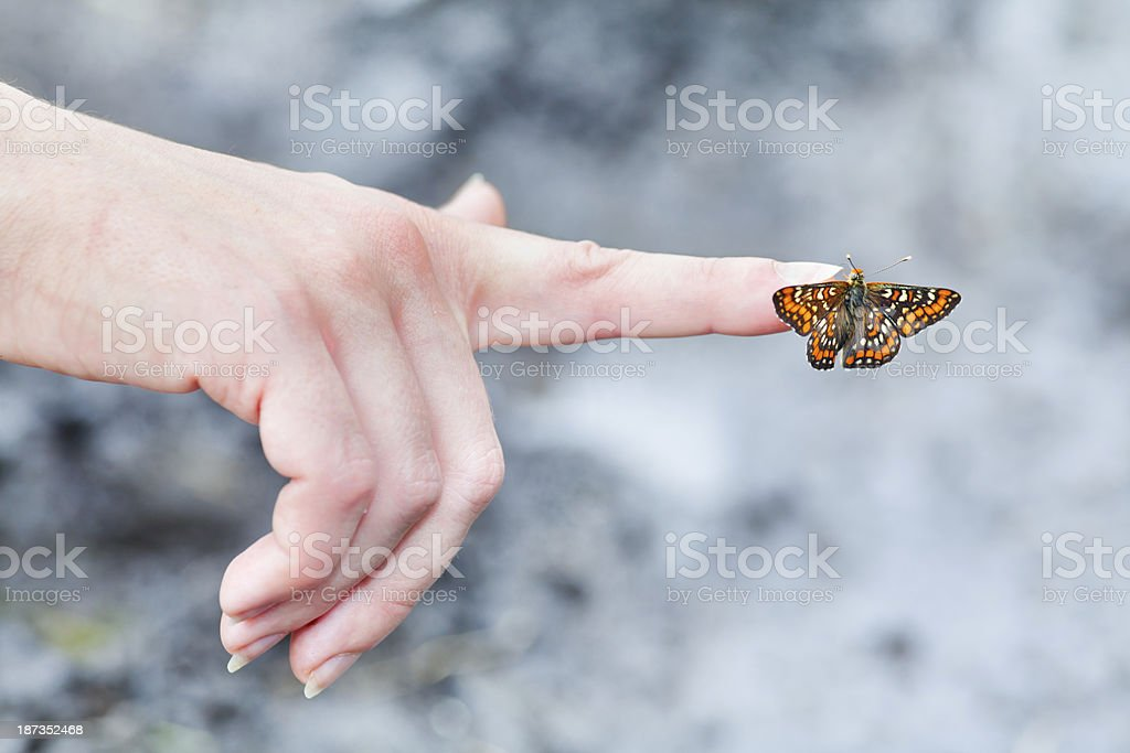 butterfly landed on  finger stock photo