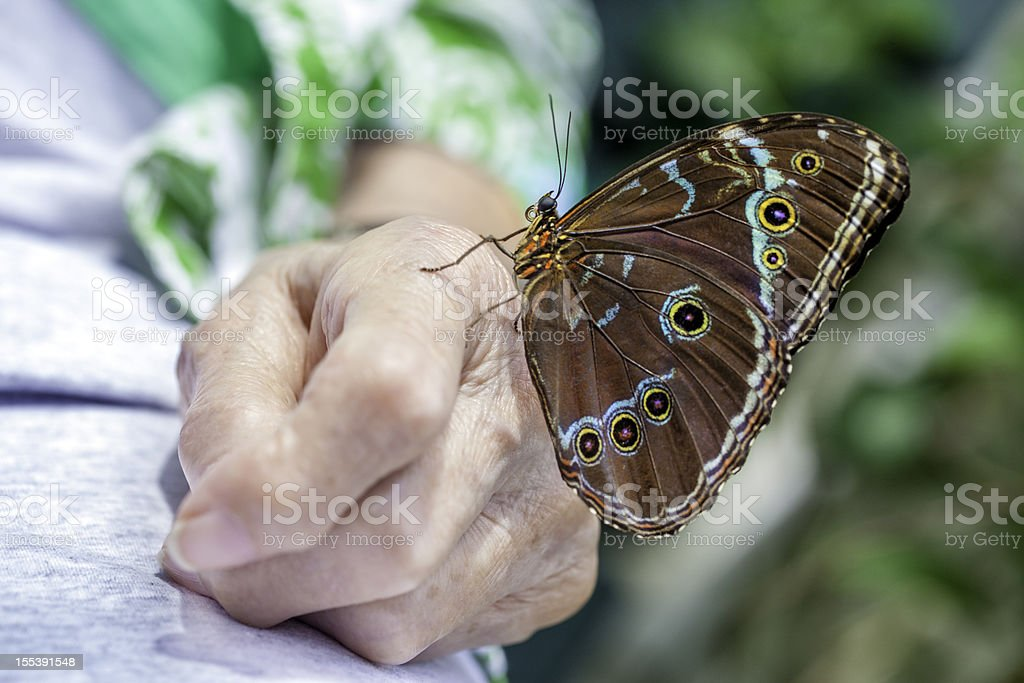 Butterfly landed on senior arthritic hand. royalty-free stock photo