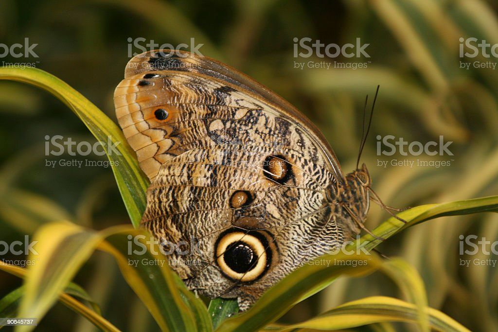 Butterfly lands on a green palm frond stock photo