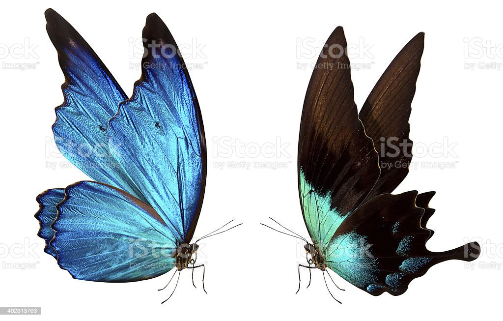 butterfly macro background stock photo