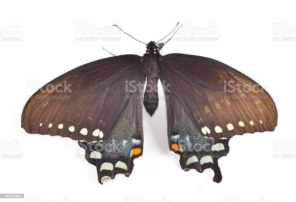 Butterfly Macro stock photo