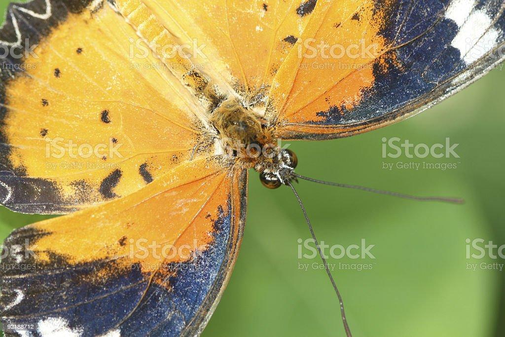 Butterfly Macro Shot stock photo