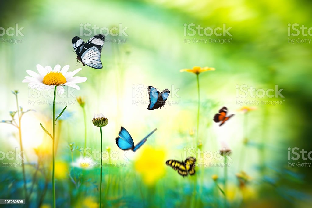Butterfly Meadow stock photo