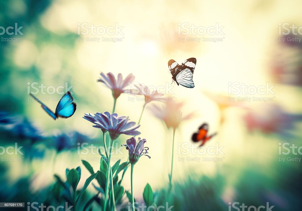 Spring meadow with butterflies.
