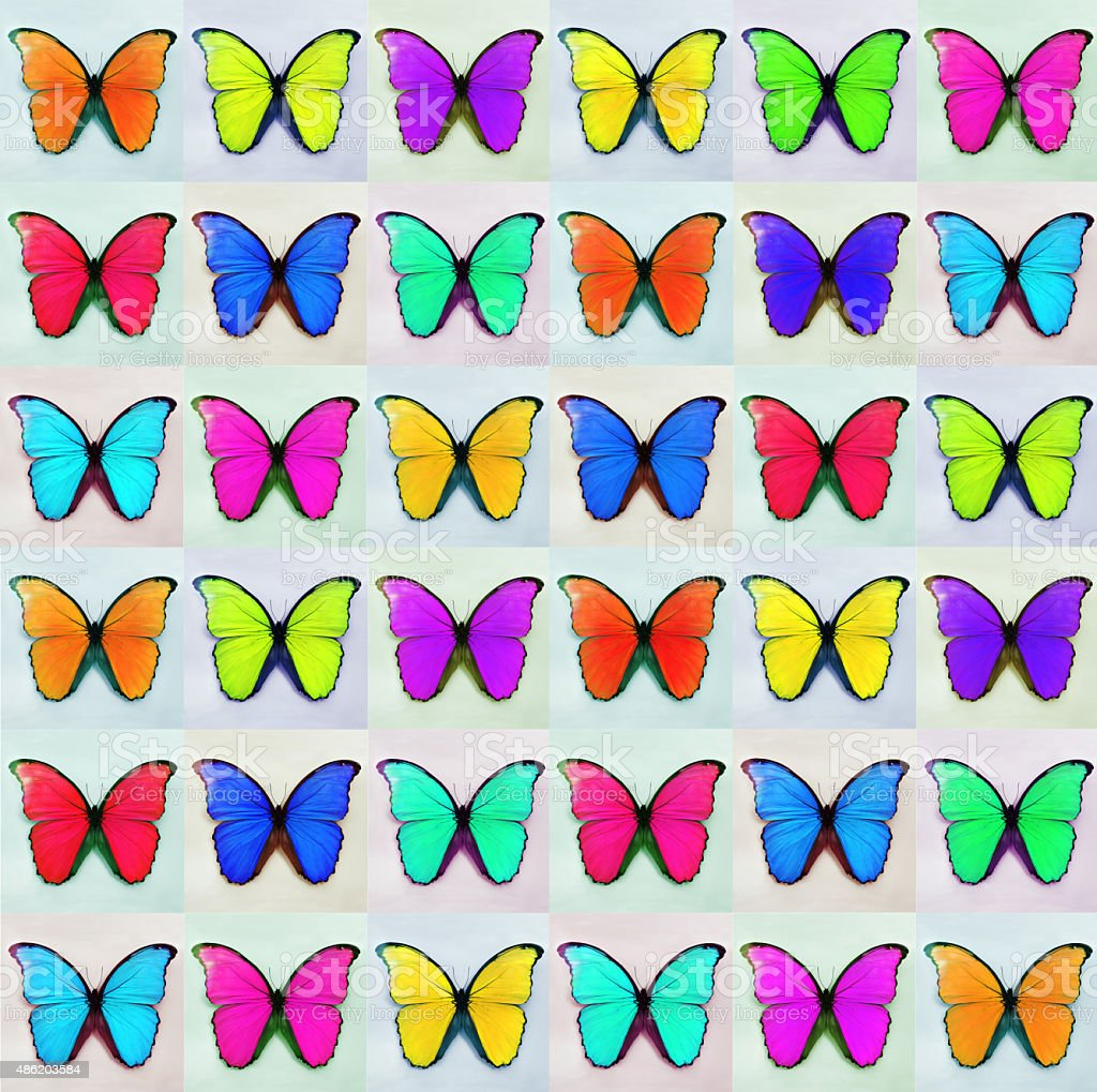 Butterfly Montage 2 stock photo