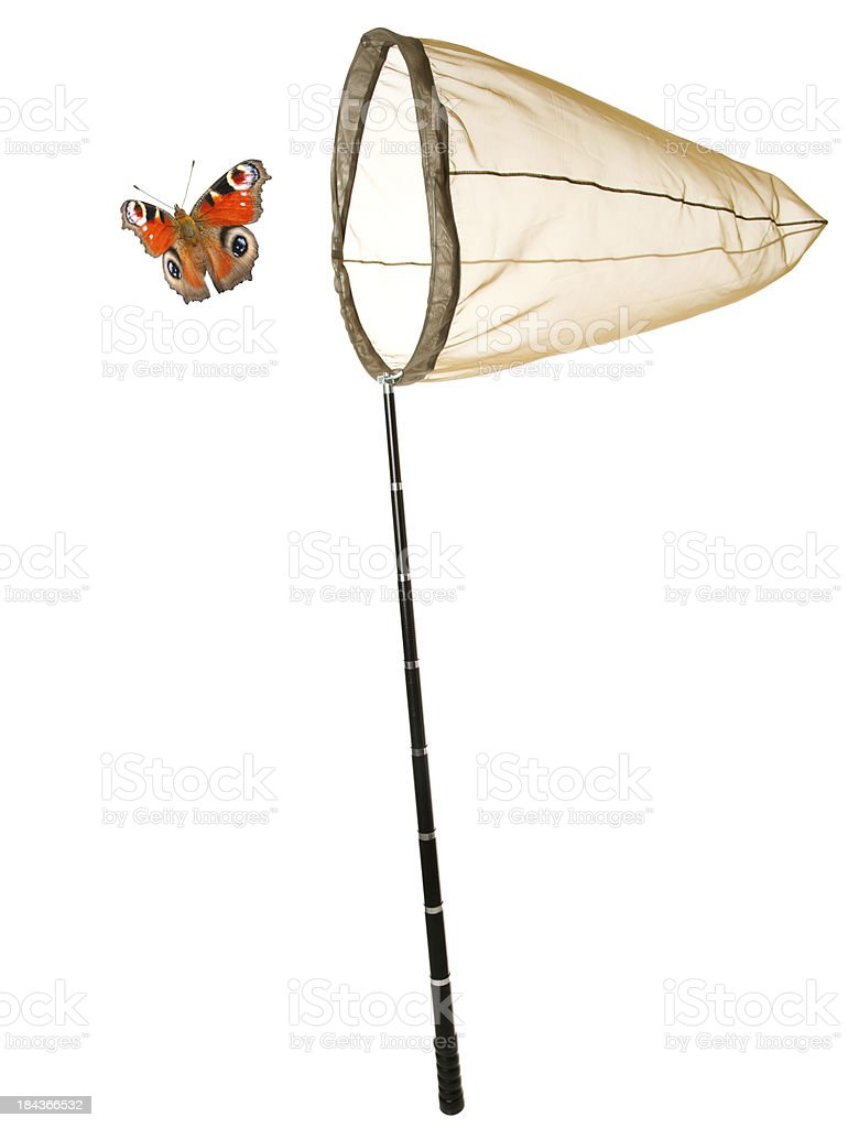 Butterfly Net royalty-free stock photo