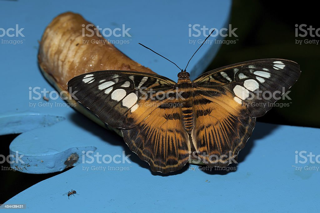 butterfly on a blue background royalty-free stock photo