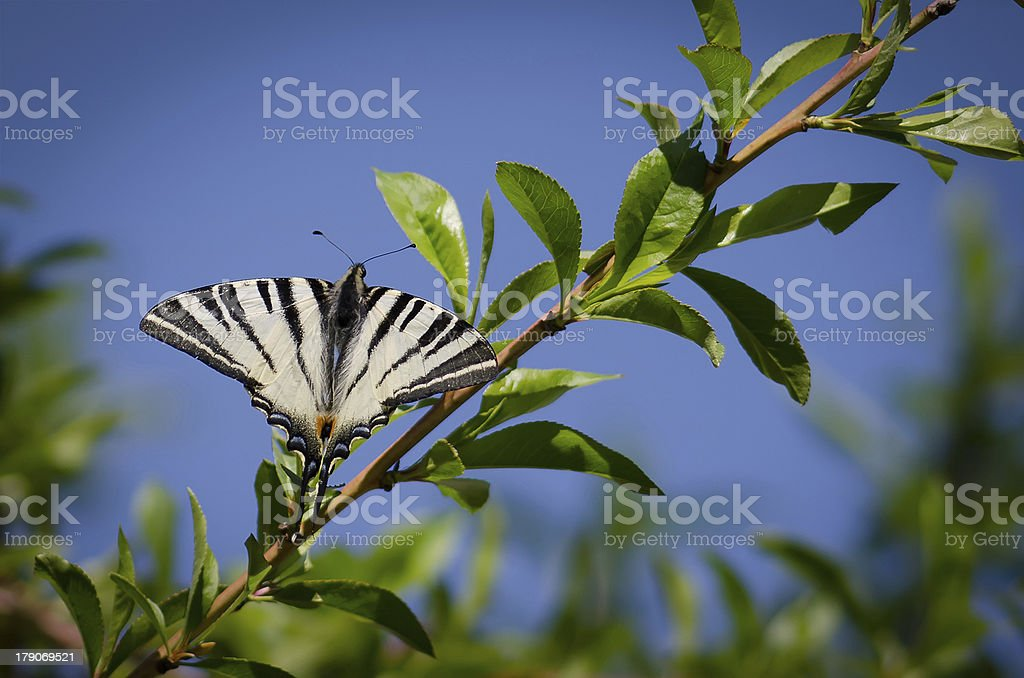 Butterfly on a branch royalty-free stock photo