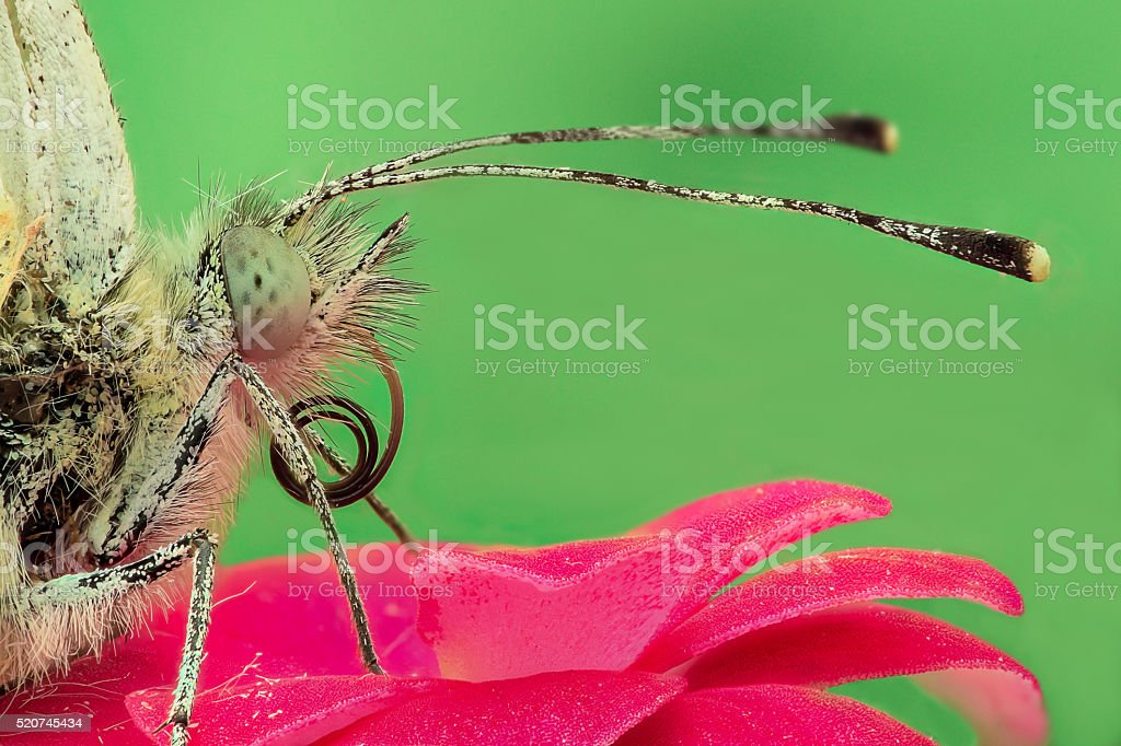 Butterfly on a flower, extreme closeup stock photo