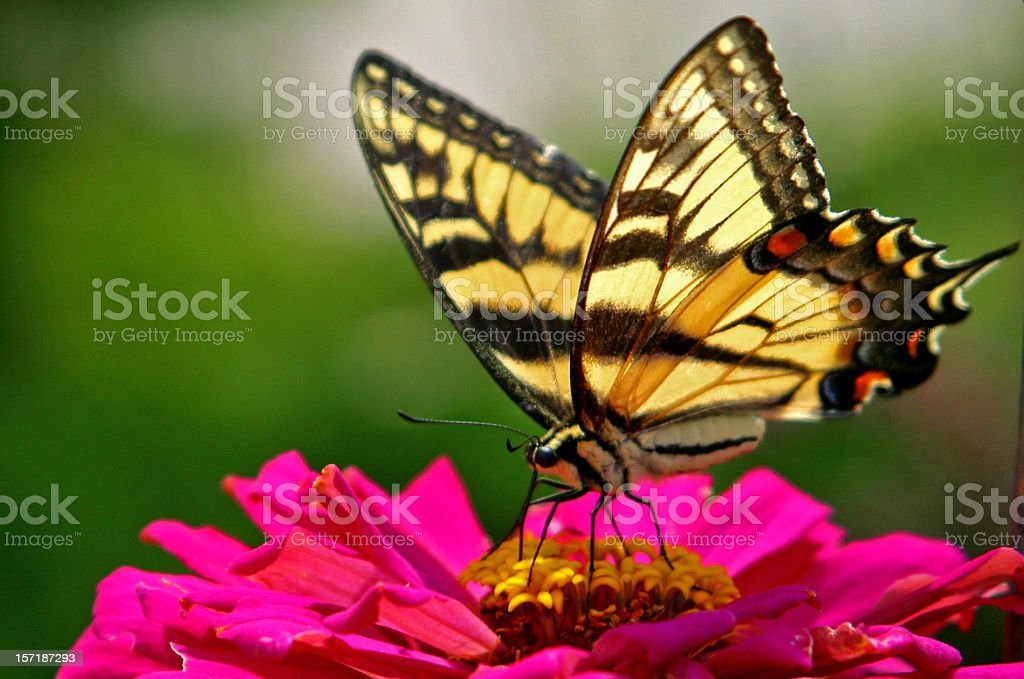 butterfly on a flower stock photo