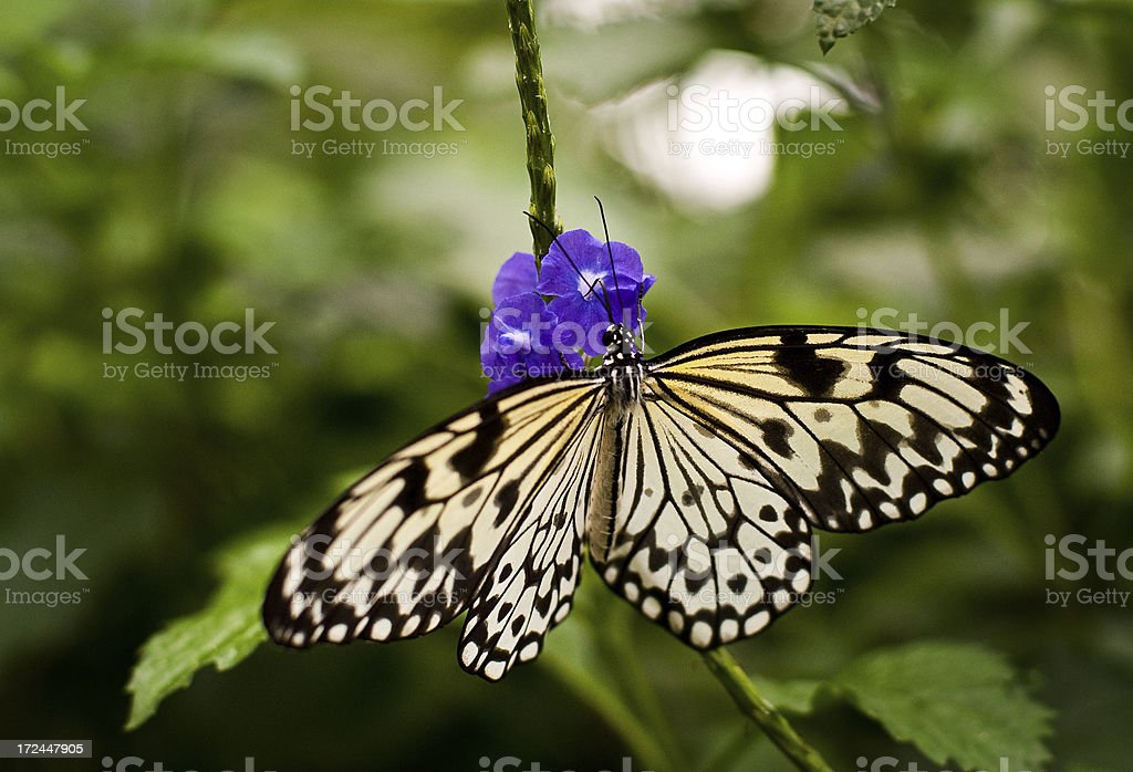 Butterfly on a Flower royalty-free stock photo