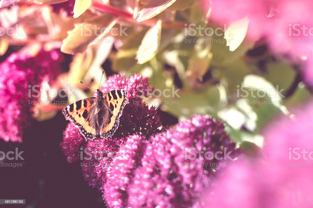 Butterfly on a Flower, Vintage look stock photo