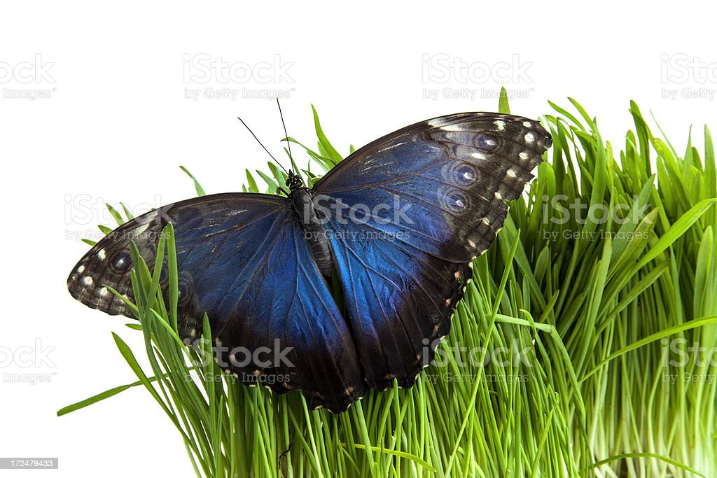 Butterfly on a grass. royalty-free stock photo