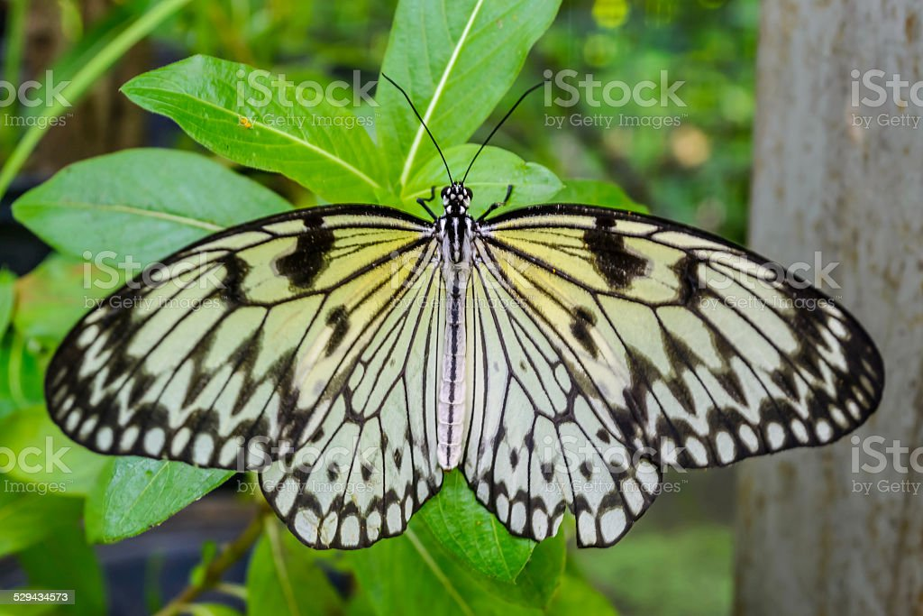 Butterfly on a green leaf. stock photo