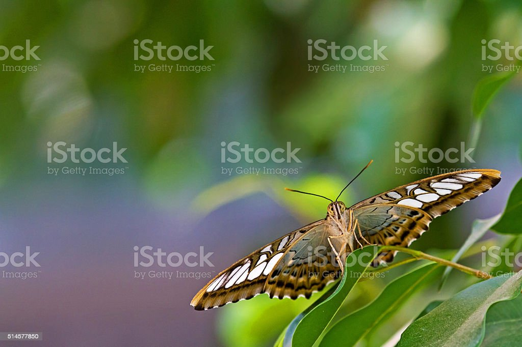 Butterfly on a green sheet stock photo