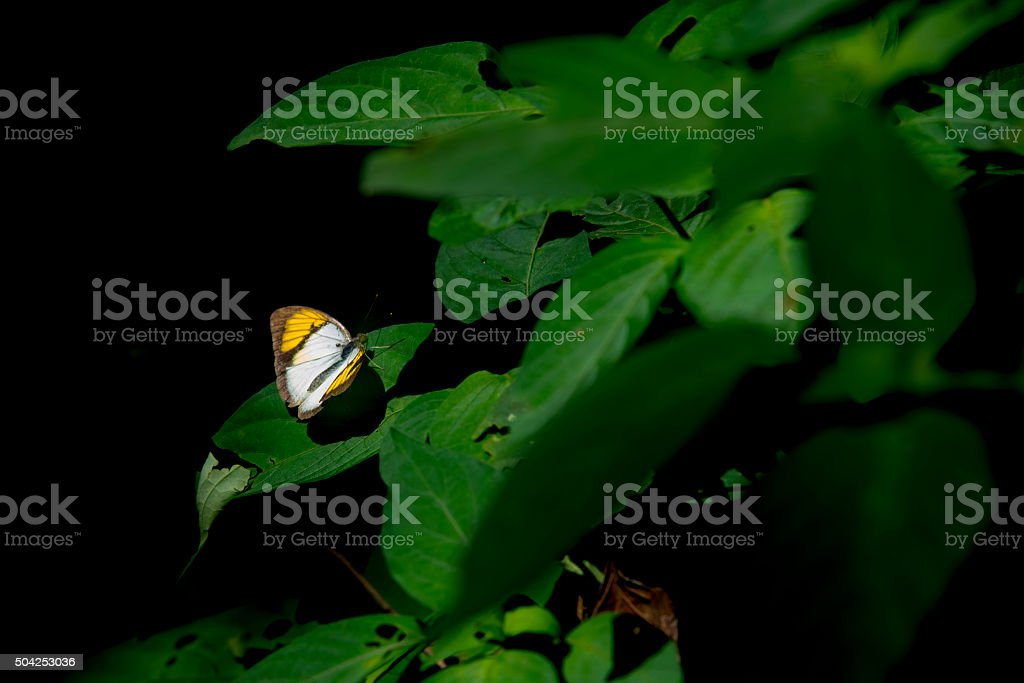 Butterfly on  a leaf.  beautiful nature in forrest. royalty-free stock photo