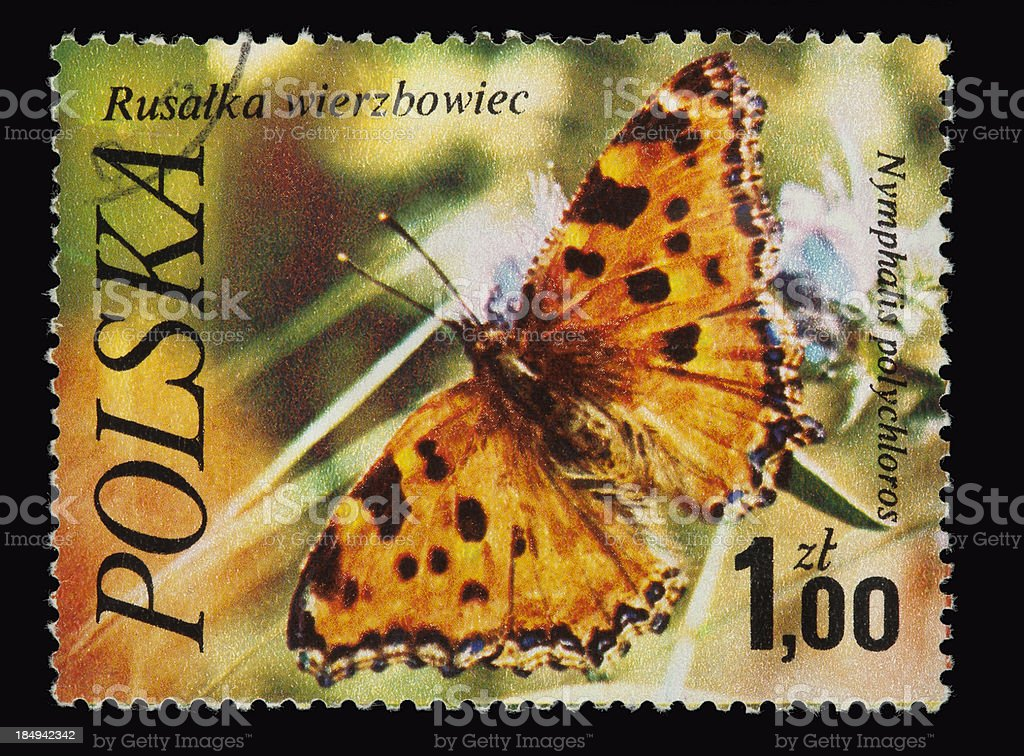 butterfly on a Polish postage stamp royalty-free stock photo