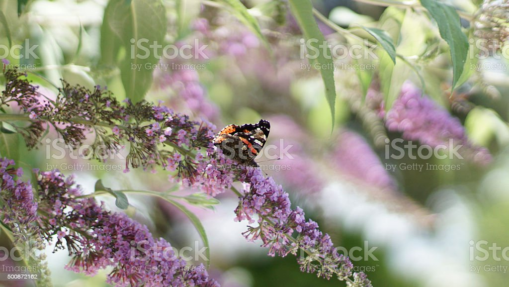 Butterfly on a spring branch stock photo