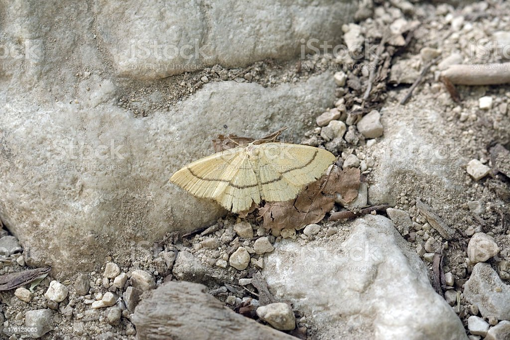 Butterfly on a stone ground royalty-free stock photo