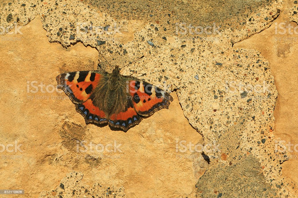 Butterfly on a wall stock photo