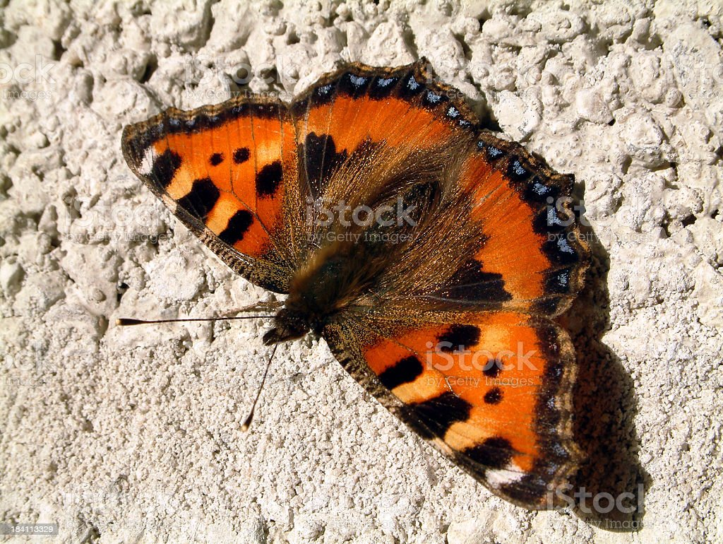 butterfly on brick wall stock photo