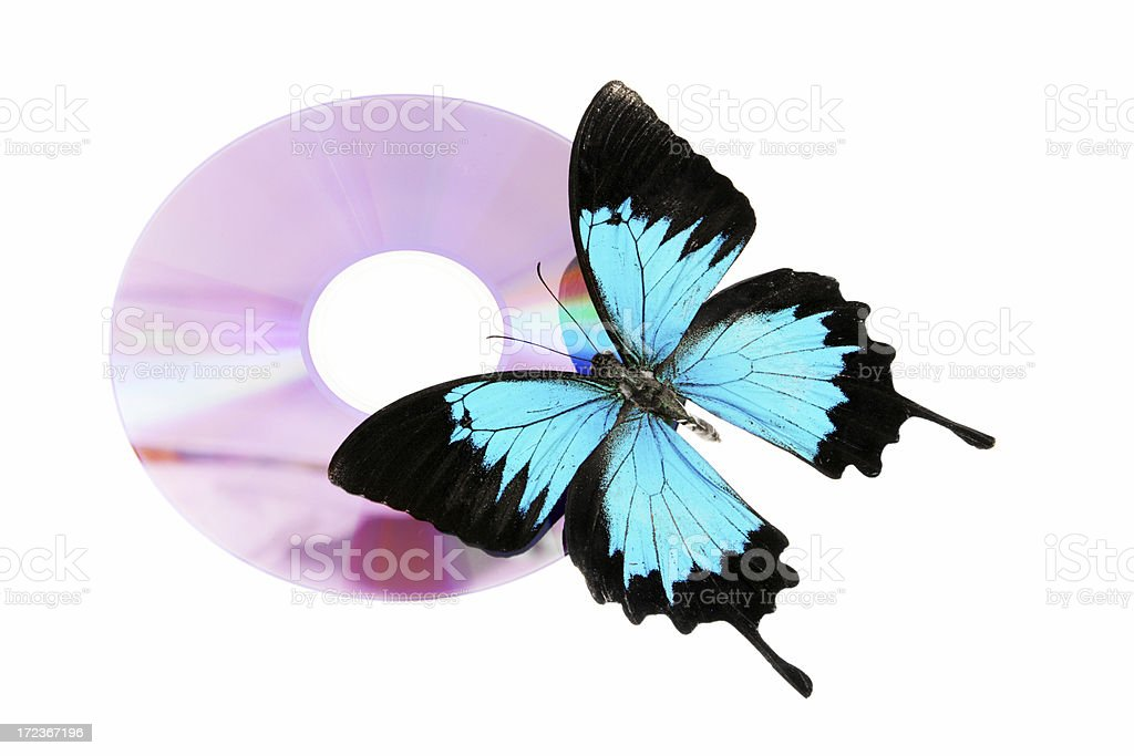 Butterfly on CD stock photo