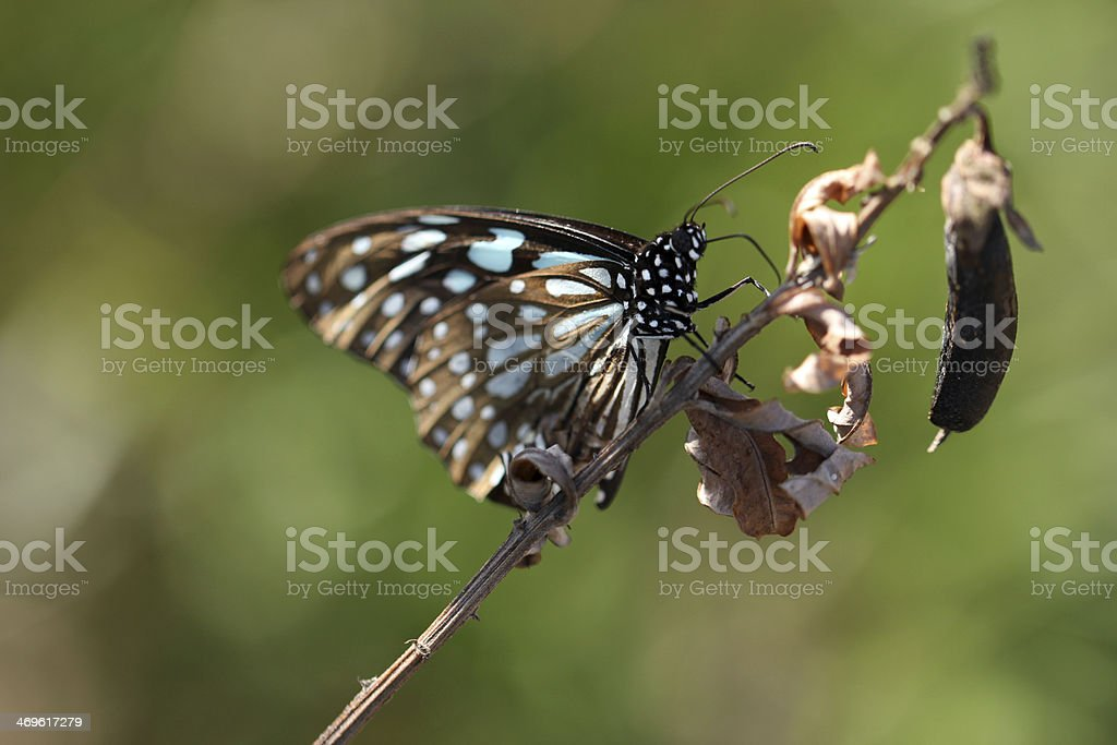 Butterfly on dry leaf stock photo