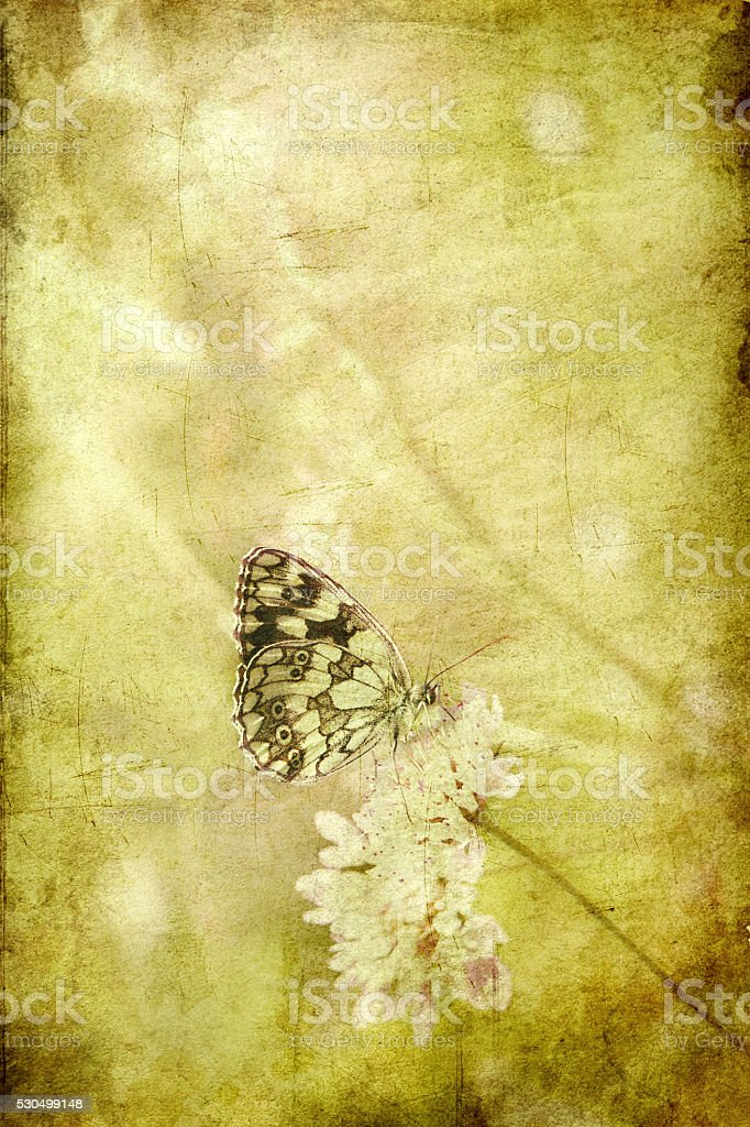 Butterfly on field flower, retro-styled image stock photo