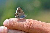 Butterfly on finger