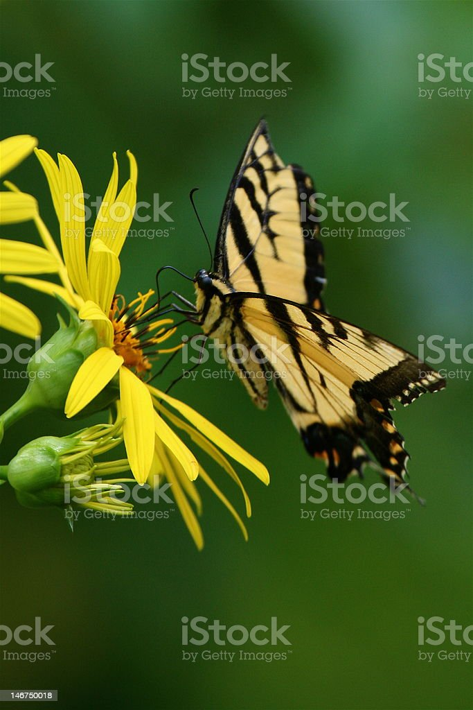 Butterfly on flower close-up stock photo