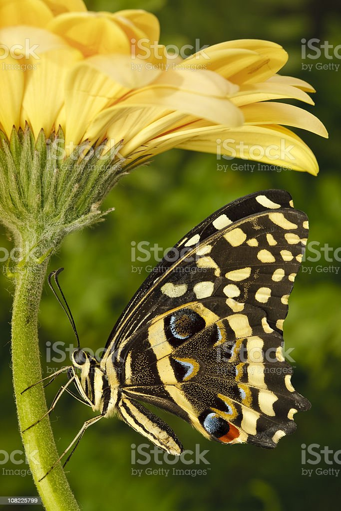 Butterfly on Flower stock photo