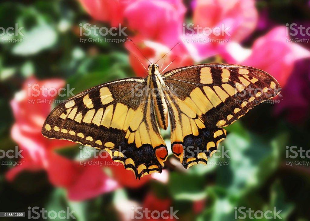 Mariposa en flor foto de stock libre de derechos