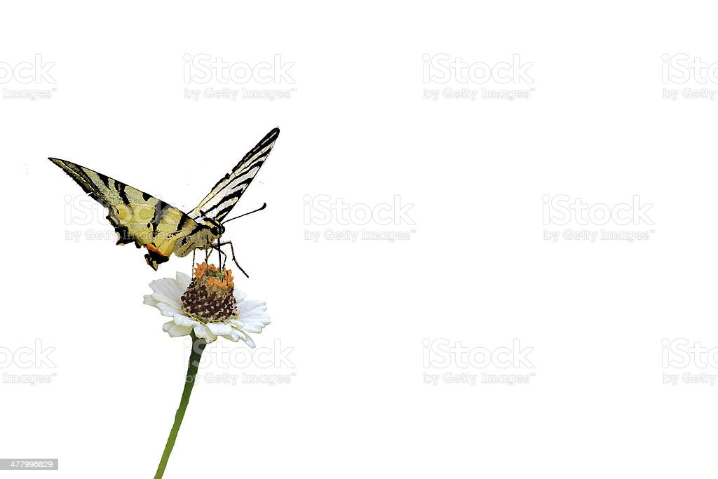butterfly on flower watercolor effect royalty-free stock photo