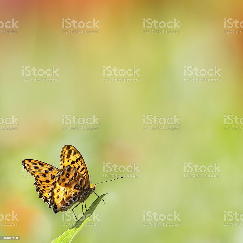 butterfly on flowers stock photo